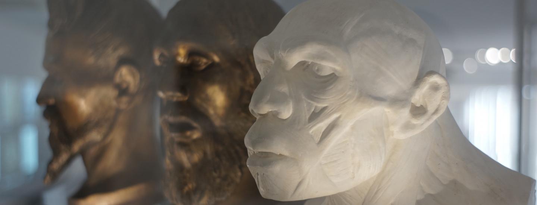 Bustes de néandertaliens et d'un Homo sapiens début du XXème siècle et XIXème siècle.
