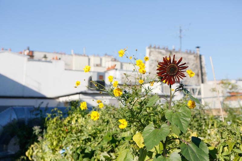 Agriculture urbaine sur le toit de ERDF