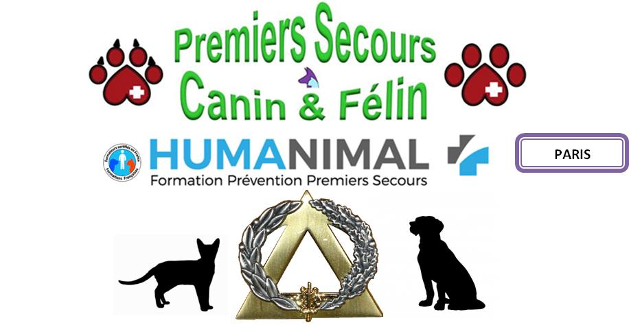 humanimal formation de premiers secours canin et f lin que faire paris. Black Bedroom Furniture Sets. Home Design Ideas