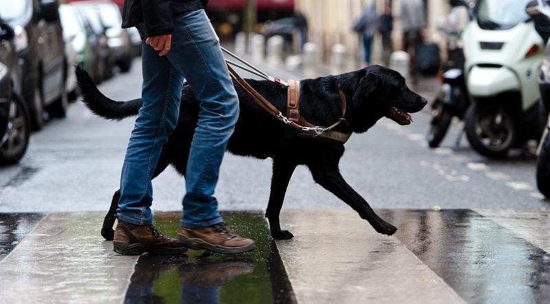 Ecole de chiens guides de Paris