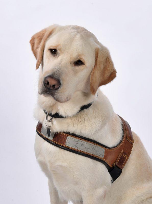 le 1000e chien guide de l'histoire de l'École de Chiens Guides de Paris
