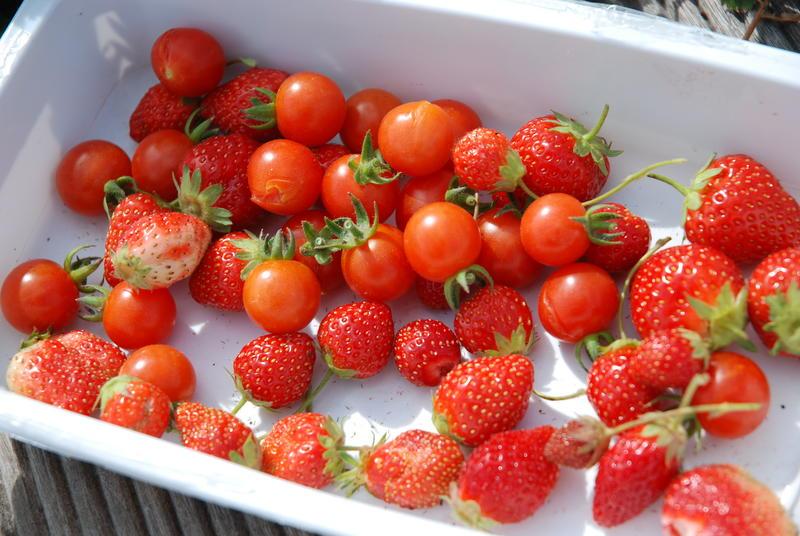 Tomates et Fraises