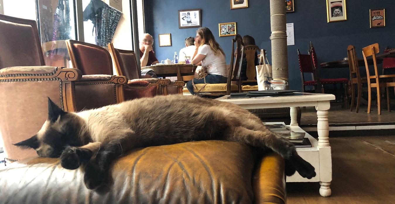 Le Café des chats