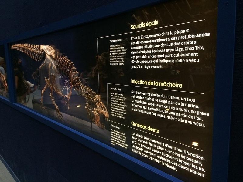 expo T-rex