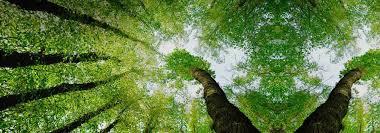 Qu'avons-nous à apprendre des arbres ? |