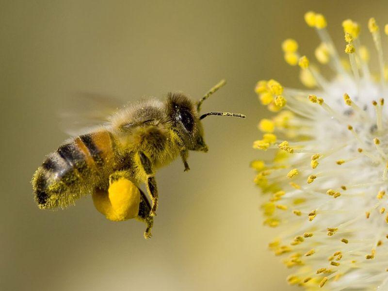 Les ruches d'ICI