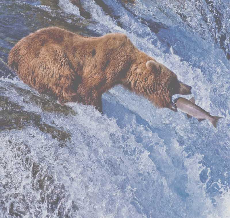 Espèce d'ours