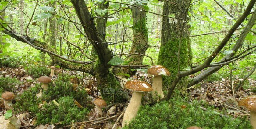 Arbres et champignons, le pacte secret de la forêt ? |