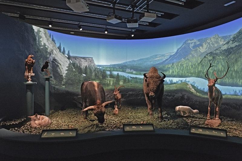 Expo Neandertal - Faune néandertalienne