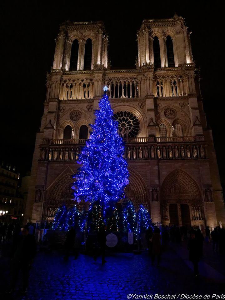 Sapin de Notre Dame