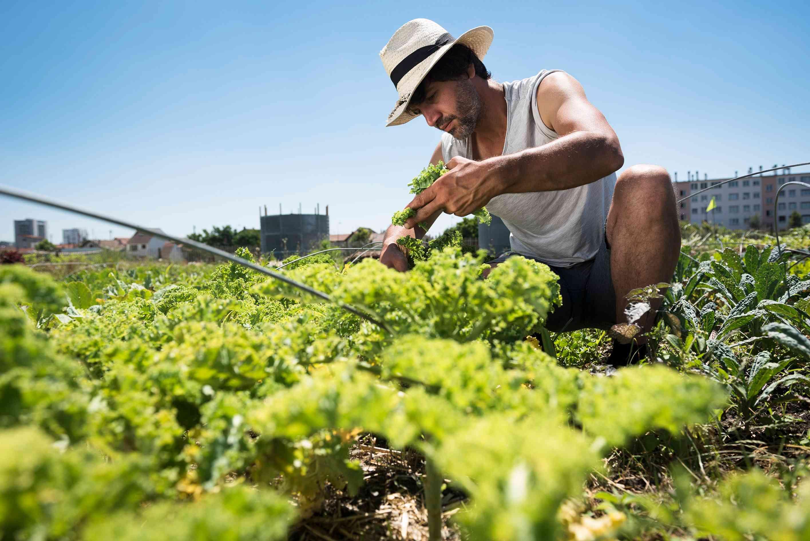 Visite de la ferme en permaculture de Saint-Denis