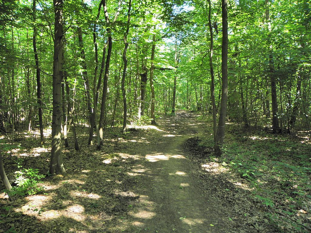 Forêt de Montmorentcy