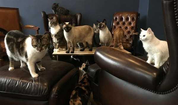café de chats