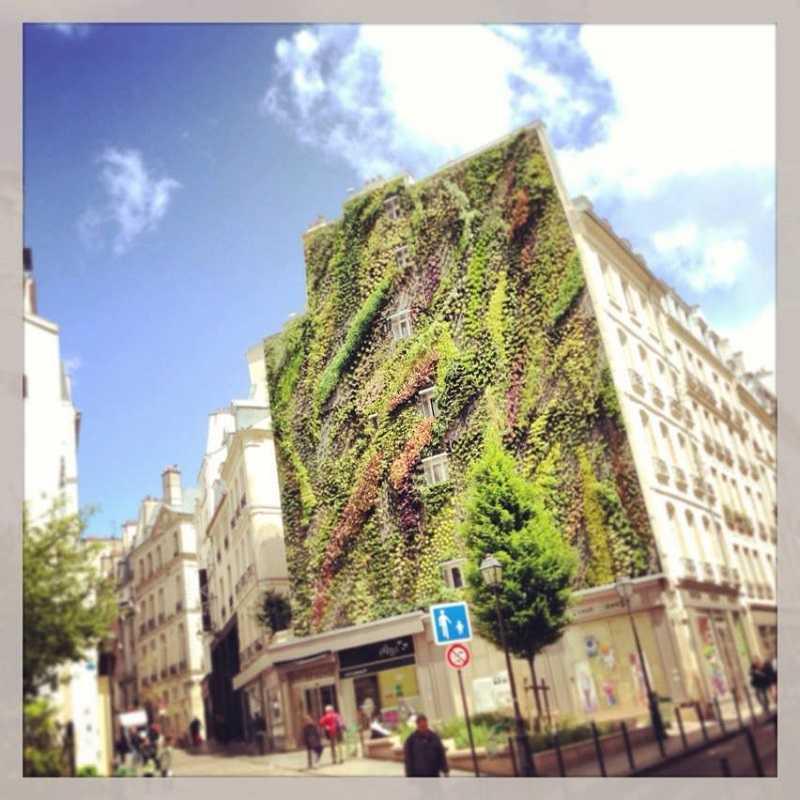 L'Oasis d'Aboukir, jardin vertical de Patrick Blanc