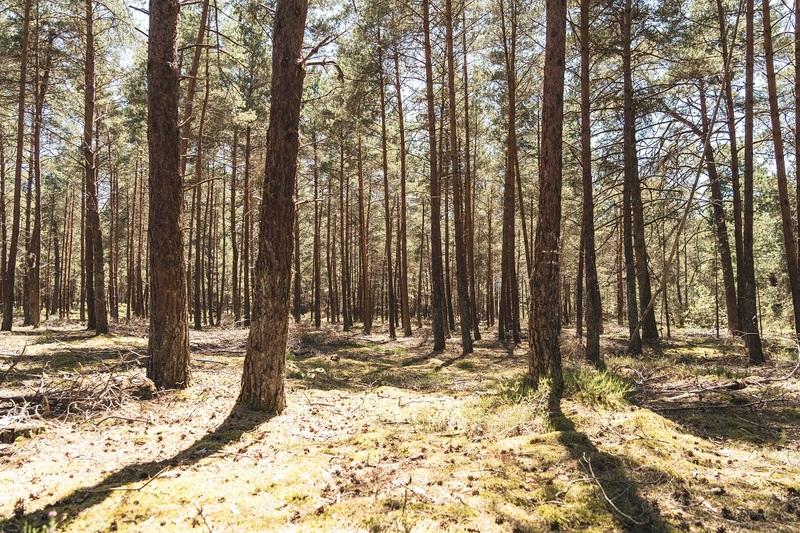 Traversée de la forêt de Rambouillet Helloways