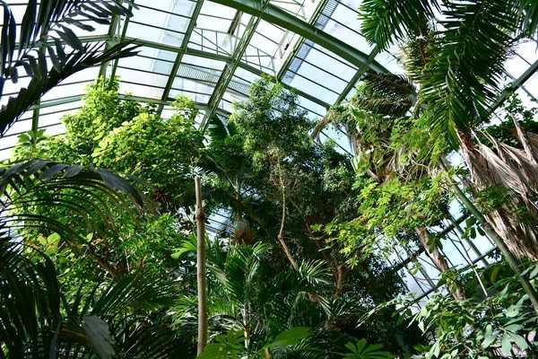 Serres jardin des plantes