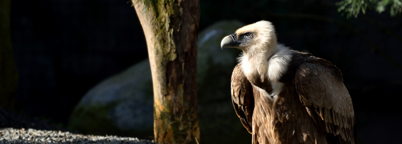 Vautours/rendez-vous sauvages zoo de Paris