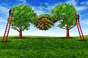 sauvons les arbres