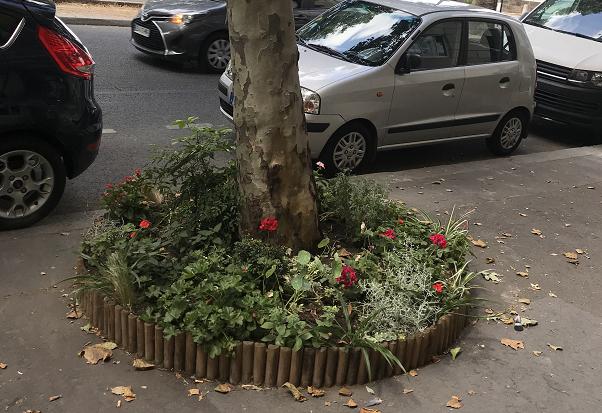 Comment encadrer le pourtour d'un pied d'arbre végétalisé ?