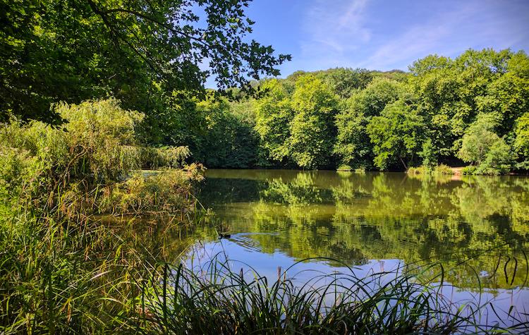 étang de Meudon